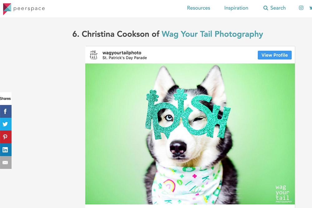 best-denver-pet-photographers