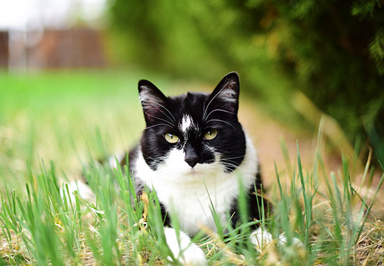 cat-photography-home-1
