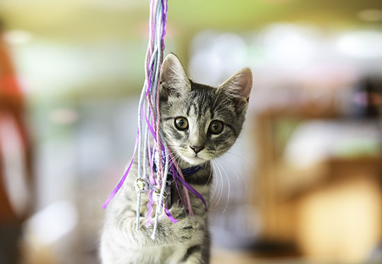 cat-photography-home-2