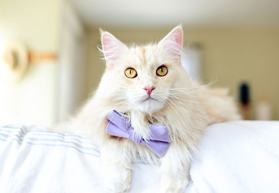 cat-photography-home-3