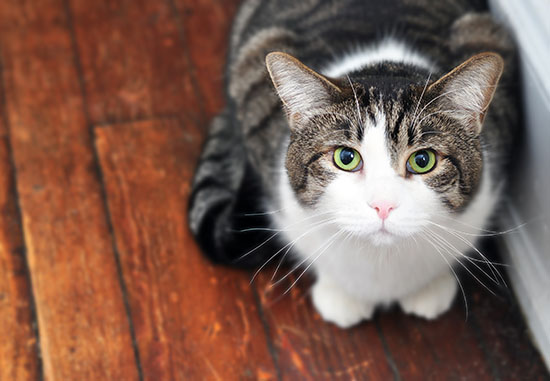 cat-photography-home-4