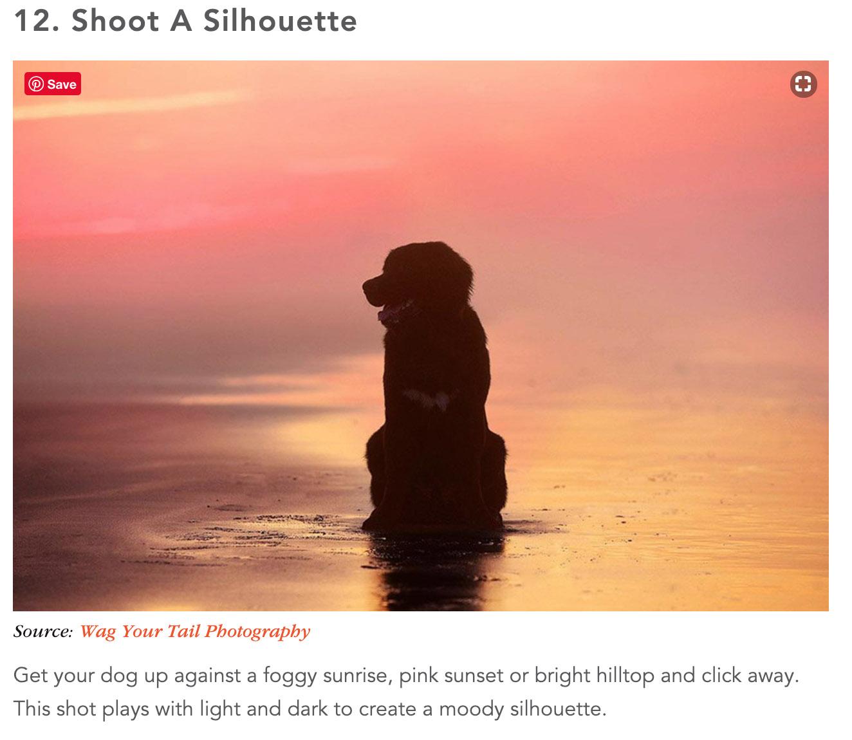 denver-pet-photographer-dog-picture-ideas-shutterfly