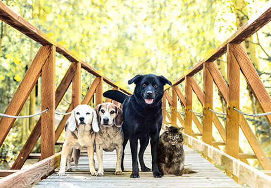 dog-photography-home-1