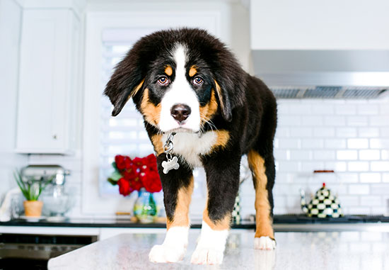 dog-photography-home-2