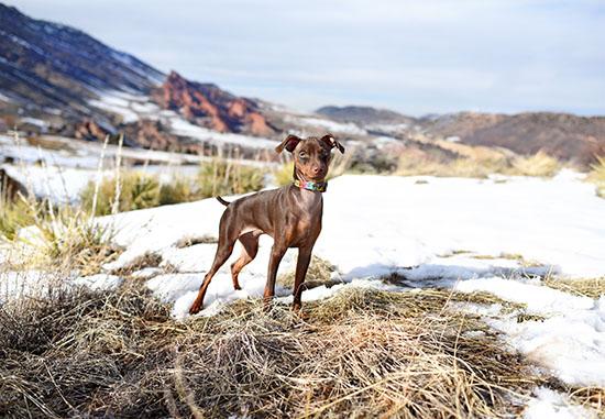 dog-photography-home-4