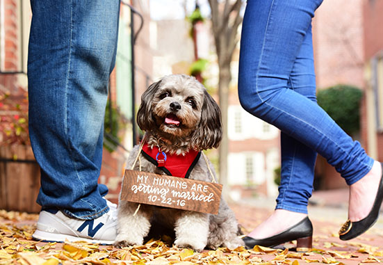 engagement-pet-photography-home-3