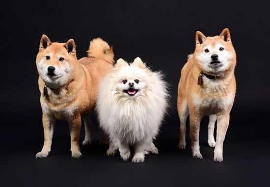 studio-pet-photography-home-3